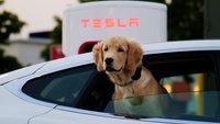 Nach E-Autos: Tesla startet als Energielieferant durch