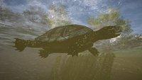 Assassin's Creed Valhalla: Europäische Sumpfschildkröten für Sarclitas-Altar finden
