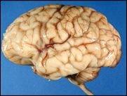 Bis der Cortex glüht: Big Brain Academy (Wii)