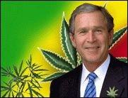 Bush, der alte Kiffer