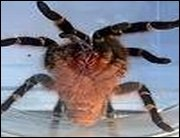 Deadly Creatures - Sie haben Euch zum Fressen gern - Neue Screens zum großen Krabbeln