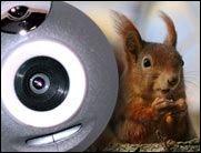 Die besten Tierwebcams der Welt!