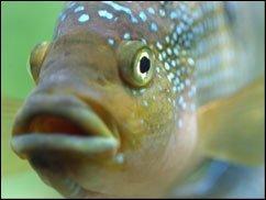 Fischers Felix fischt frische Fische