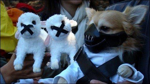 Halloween - Die irrsten Tierkostüme