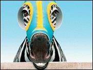 Im Kino: Im Rennstall ist das Zebra los!