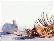 Jedem Tierchen sein Pläsierchen
