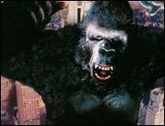 King Kong-Update!