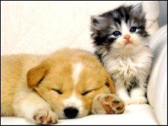 MyWorld # 41: Wir retten alle Tiere aus dem Tierheim...