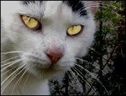 ROFL TV:  Der große Catfight