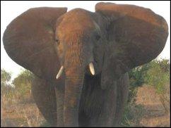 ROFL TV: Elefantendressur