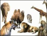 ROFL TV: Tiere in einer neuen Perspektive