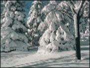 ROFL TV: Wintertraum