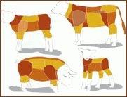 Tierhaltung Rind, Kalb, Lamm und Schwein