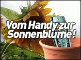 Vom Handy zur Sonnenblume!