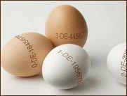 Was war zuerst da? Ei oder Henne?